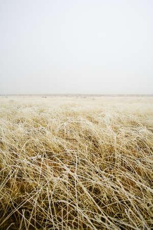 raniszewski: Tall grass in a field
