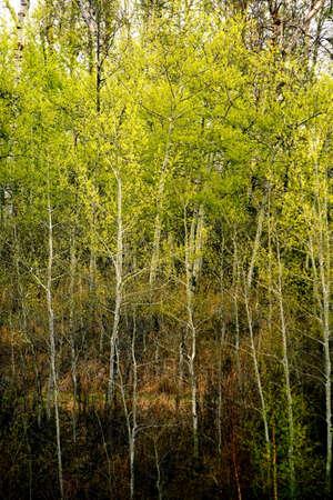 Dense leafy trees