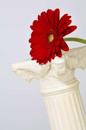 leah: Gerber flower on a pedestal Stock Photo