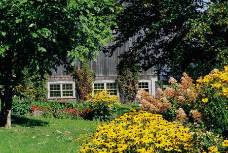 Wild garden with barn in background Stock Photo - 7210156