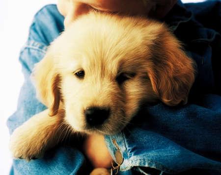 Boy hugging puppy photo