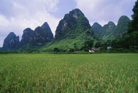 Rice field near Yangshuo in China Stock Photo - 7210298