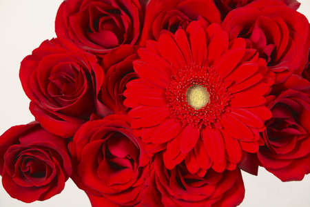 Closeup view of a red gerber with roses photo