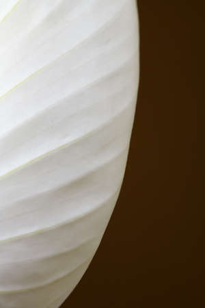 raniszewski: Close-up of a Peace lily Stock Photo