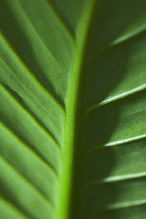 raniszewski: Close-up of green leaf
