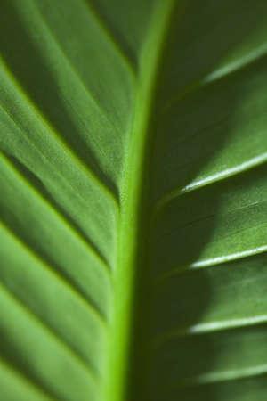 raniszewski: Close-up of green leaf