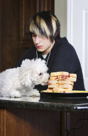 inattentive: Teenager listening to music while his dog is on the counter eating sandwiches