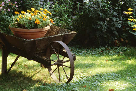 Flower pot in a wheelbarrow 版權商用圖片