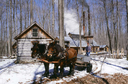 historical periods: Horse and wagon by sugar house