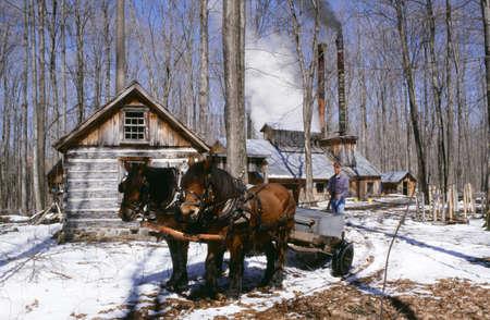 Pferd und Wagen von Zucker-Haus  Standard-Bild - 7201457