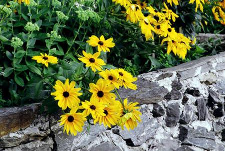 Yellow daisies  Stock Photo - 7201129