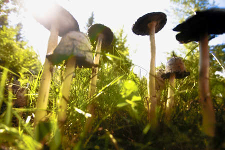 Mushroom patch photo