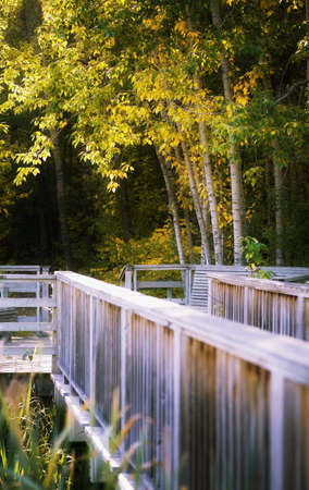 Footbridge in forest Stock Photo - 7209963