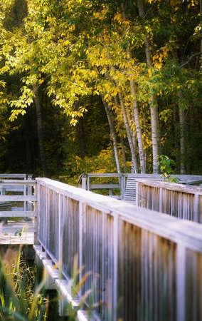 Footbridge in forest Stock Photo - 7209963