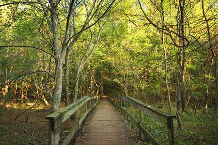 glubish: Wooden bridge in forest