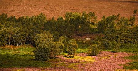 derbyshire: Field in Derbyshire, England