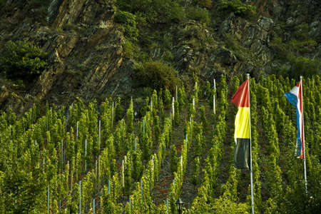 viticulture: Moselle valley viticulture with flags