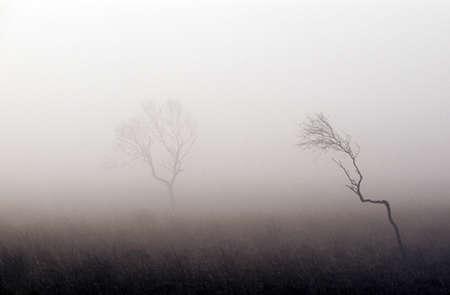 atmospheric phenomena: Bare trees in thick fog, Peak District National Park, Derbyshire, England Stock Photo