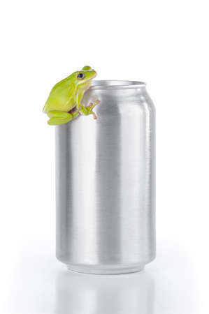 green tree frog: Green tree frog on an aluminum can