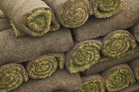 warkentin: Turf in rolls