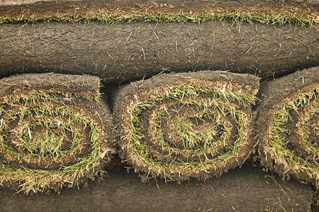 warkentin: Closeup of turf