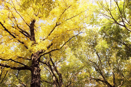 fullframes: Trees with yellow and green leaves Stock Photo