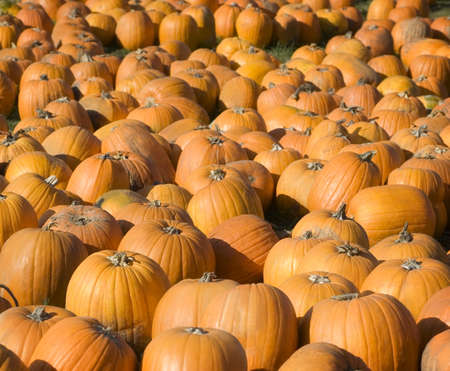 fullframes: Pumpkins Stock Photo