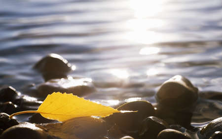 knorr: An autumn leaf on rocks in water