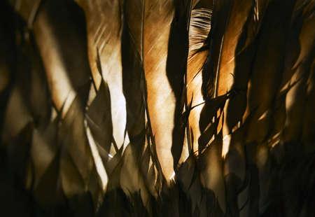 knorr: Turkey feathers Stock Photo