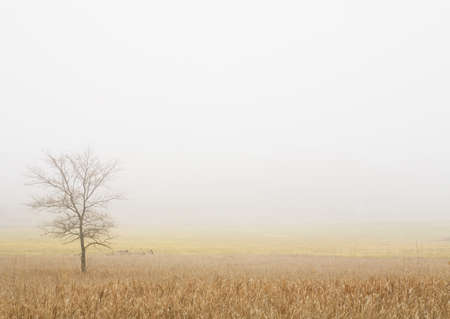knorr: Lone tree in a wheat field Stock Photo