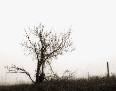 knorr: Dying tree silhouette Stock Photo