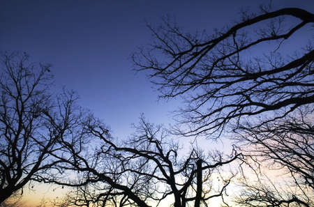 knorr: Tree branches Stock Photo