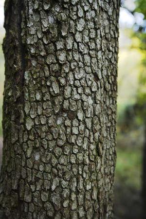 glubish: Tree trunk