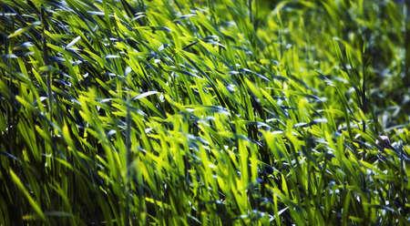 tanasiuk: Grass Stock Photo