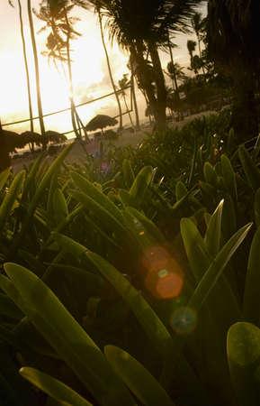 tanasiuk: Resort in Dominican Republic, Carribean