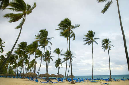 Beach resort in the Dominican Republic, Caribbean photo