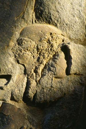 louxor: Relief en pierre, le temple de Louxor, Louxor, �gypte