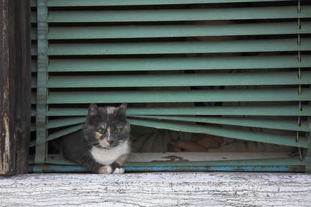 Cat on window sill in Venice, Italy photo