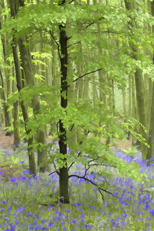 impression: Bluebell wood impression   Stock Photo