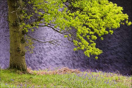 chris upton: Tree in the breeze   Stock Photo