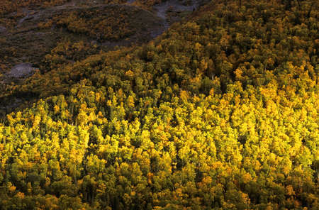Forest in Fall, Gros Morne National Park, Newfoundland, Canada Stock Photo - 7210277