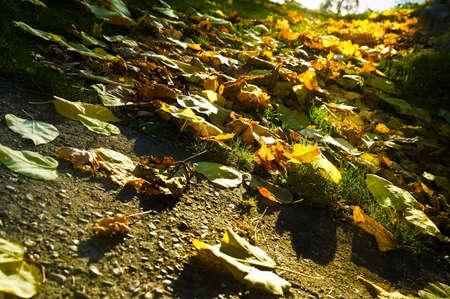 tanasiuk: Fallen leaves on the ground