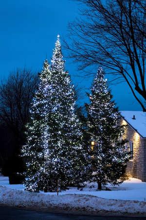 Trees illuminated with lights