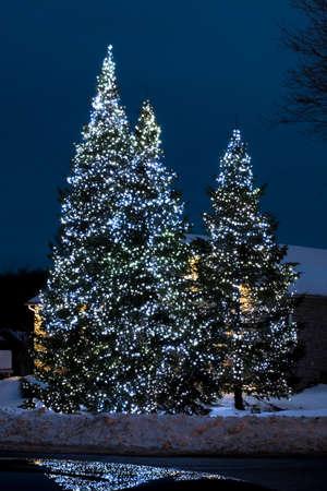 外の木にクリスマス ライト 写真素材