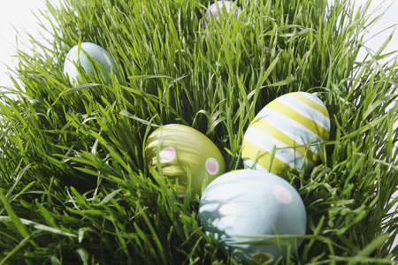 occasions: Easter eggs in grass