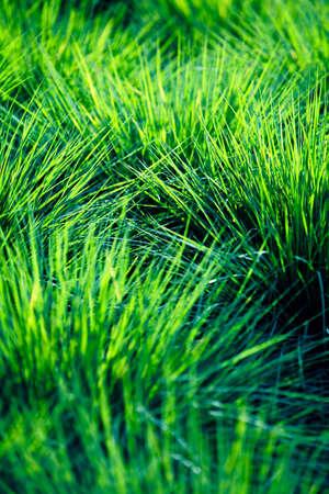 fullframes: Closeup of grass