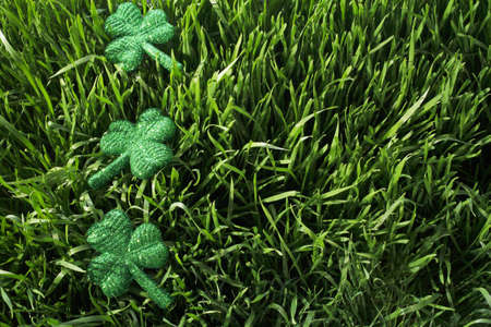 Shamrocks in the grass Stock Photo - 7210489
