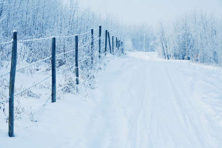 winter road: Tracks in the snow by a fence