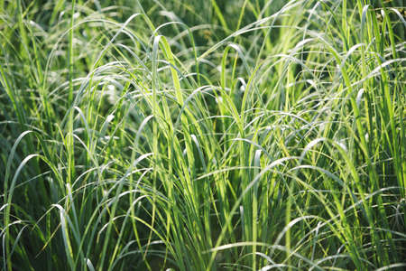 fullframes: Tall grass Stock Photo