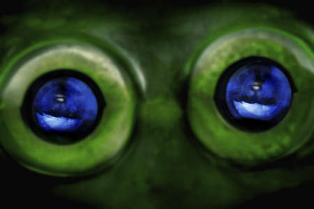 Alien eyes Stock Photo